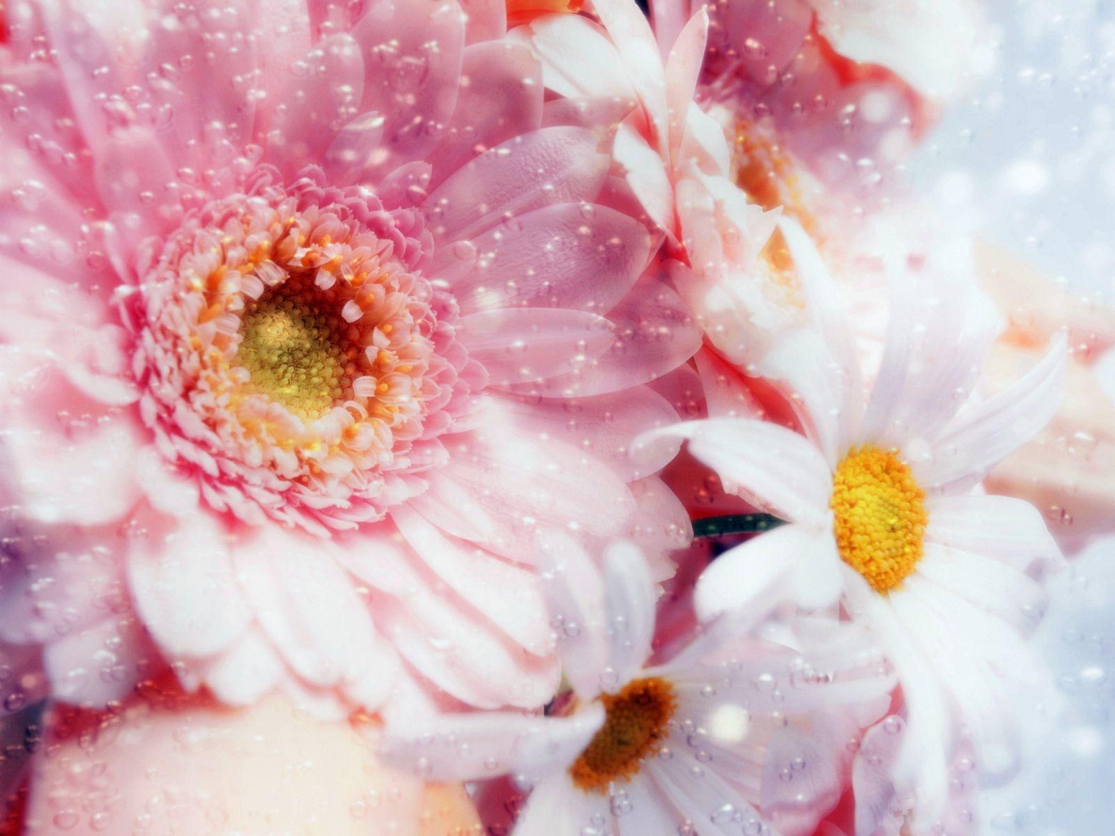 dreams pink flowers wallpaper flowers nature wallpaper 1600 1200 1520 1600x1200