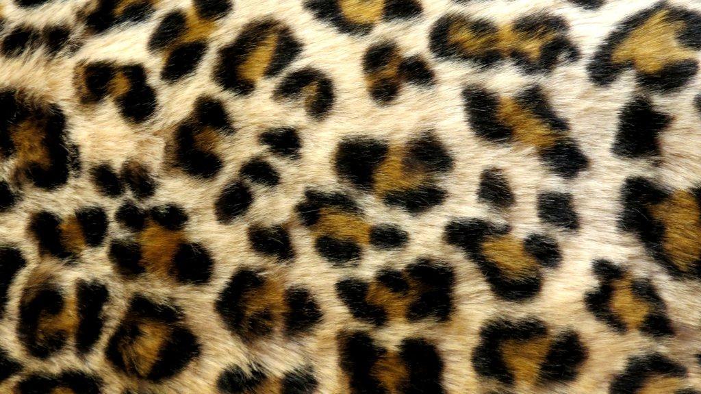 Leopard Print Live Wallpaper screenshot 1024x575
