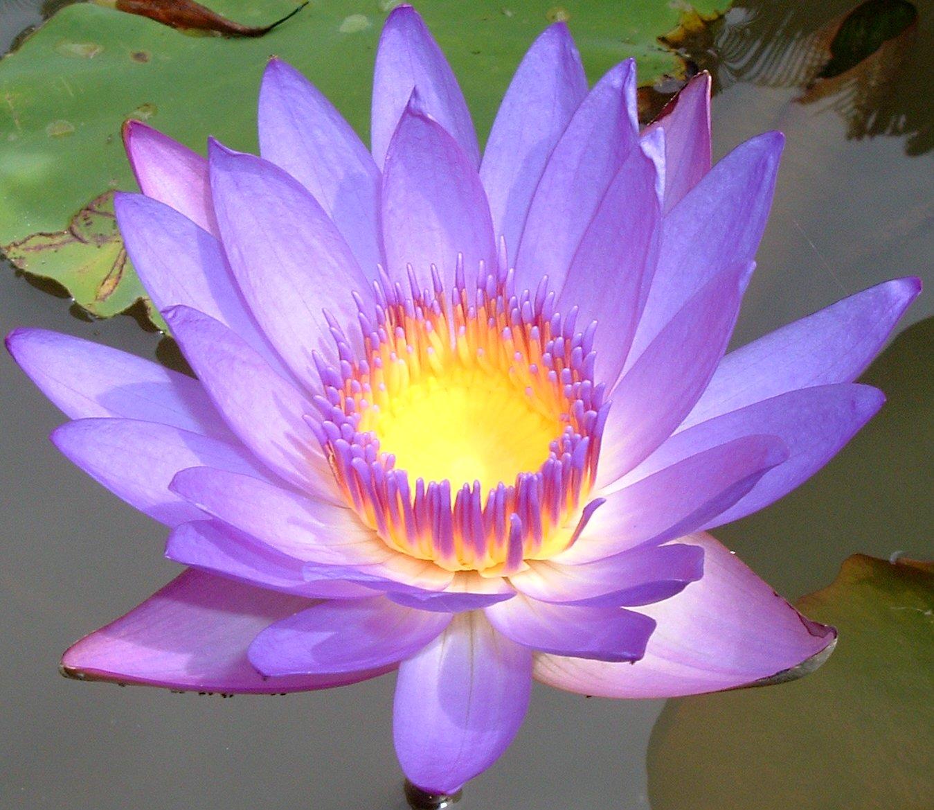 Purple Flower Desktop Wallpaper wallpaper Purple Flower Desktop 1349x1169