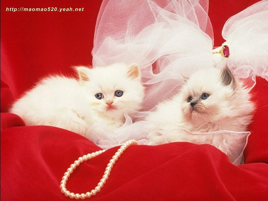 Kittens images Cute Kitten Wallpaper wallpaper photos 1024x768