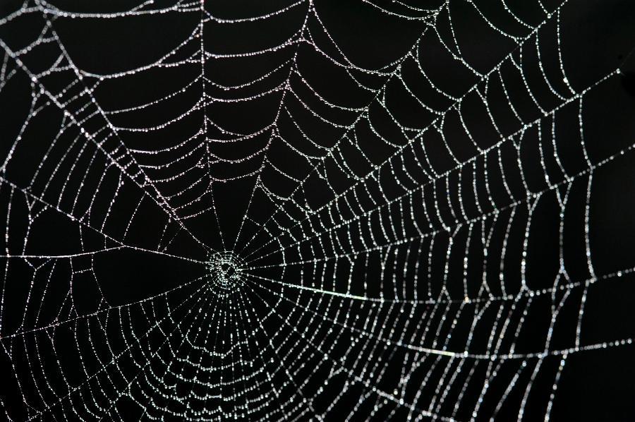 Spider Web Black Background Gossamer thin spider web 900x598