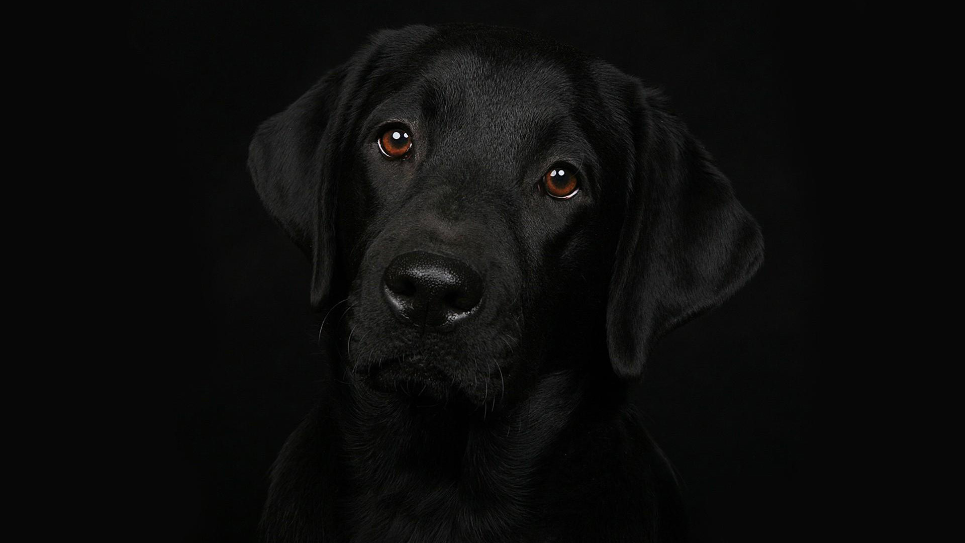 Download Black Dog Wallpaper The Quotes Land 1920x1080