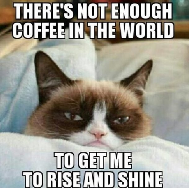 days ago http meme lol com funny grumpy cat meme lol funny pictures 610x608