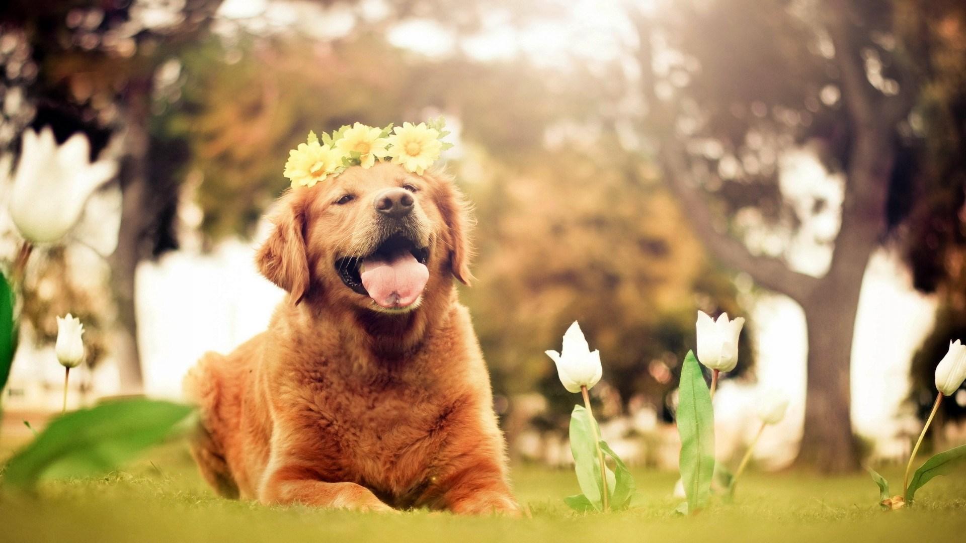 Hd wallpaper dog - Dogs Desktop Backgrounds Wallpaper High Definition High Quality