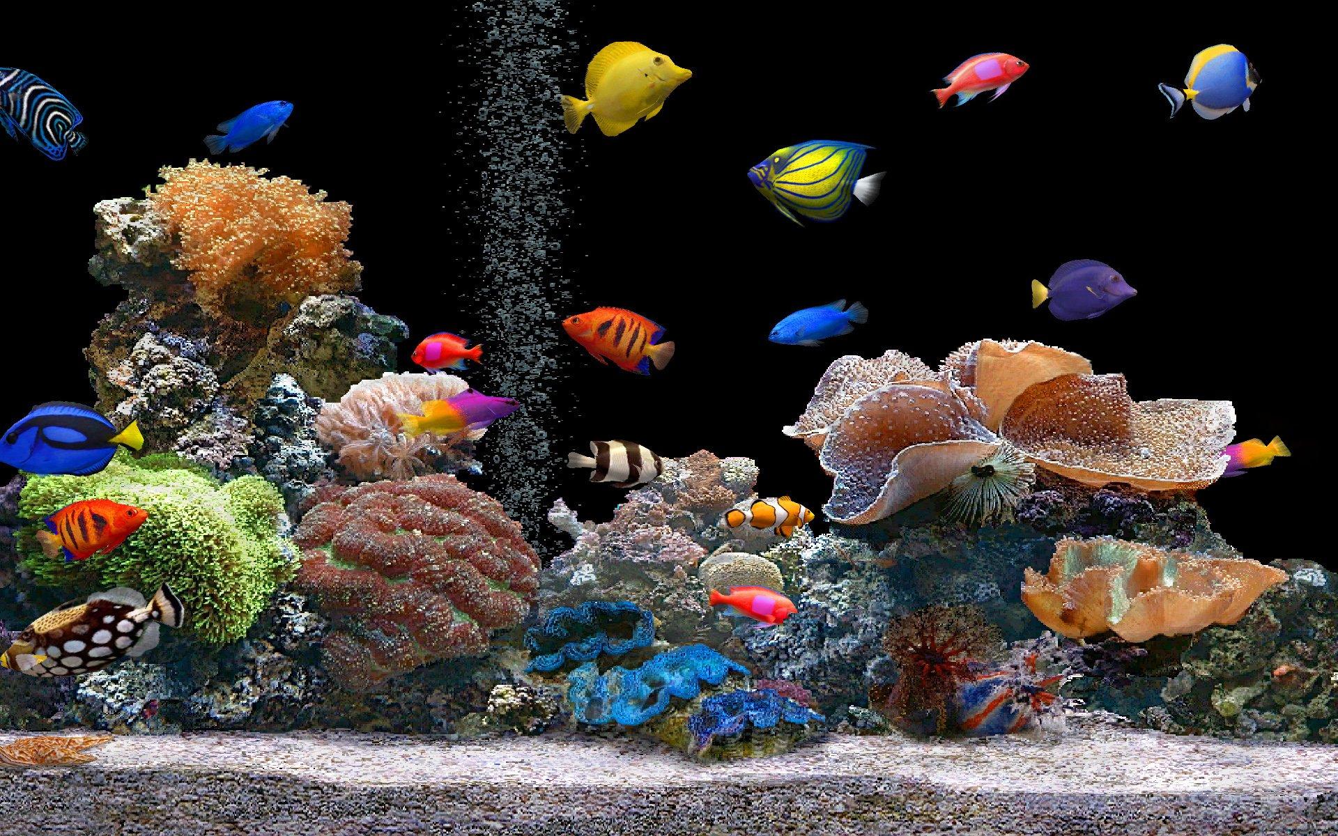 aquarium colorful screensavers wallpapers hd free 138274