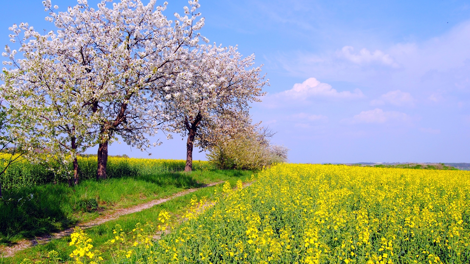 Spring spring nature scenery fields flowers blue sky 1920x1080