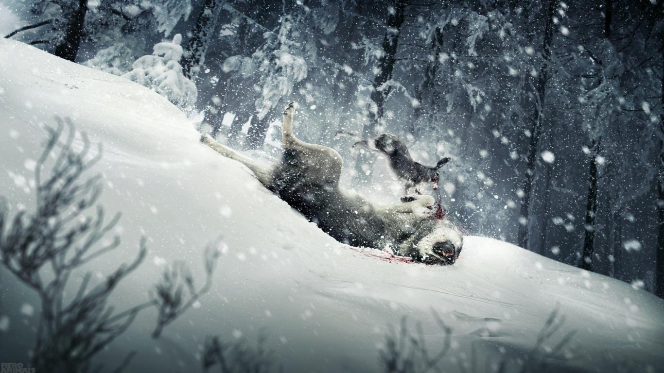 Animals in Snow Wallpaper - WallpaperSafari
