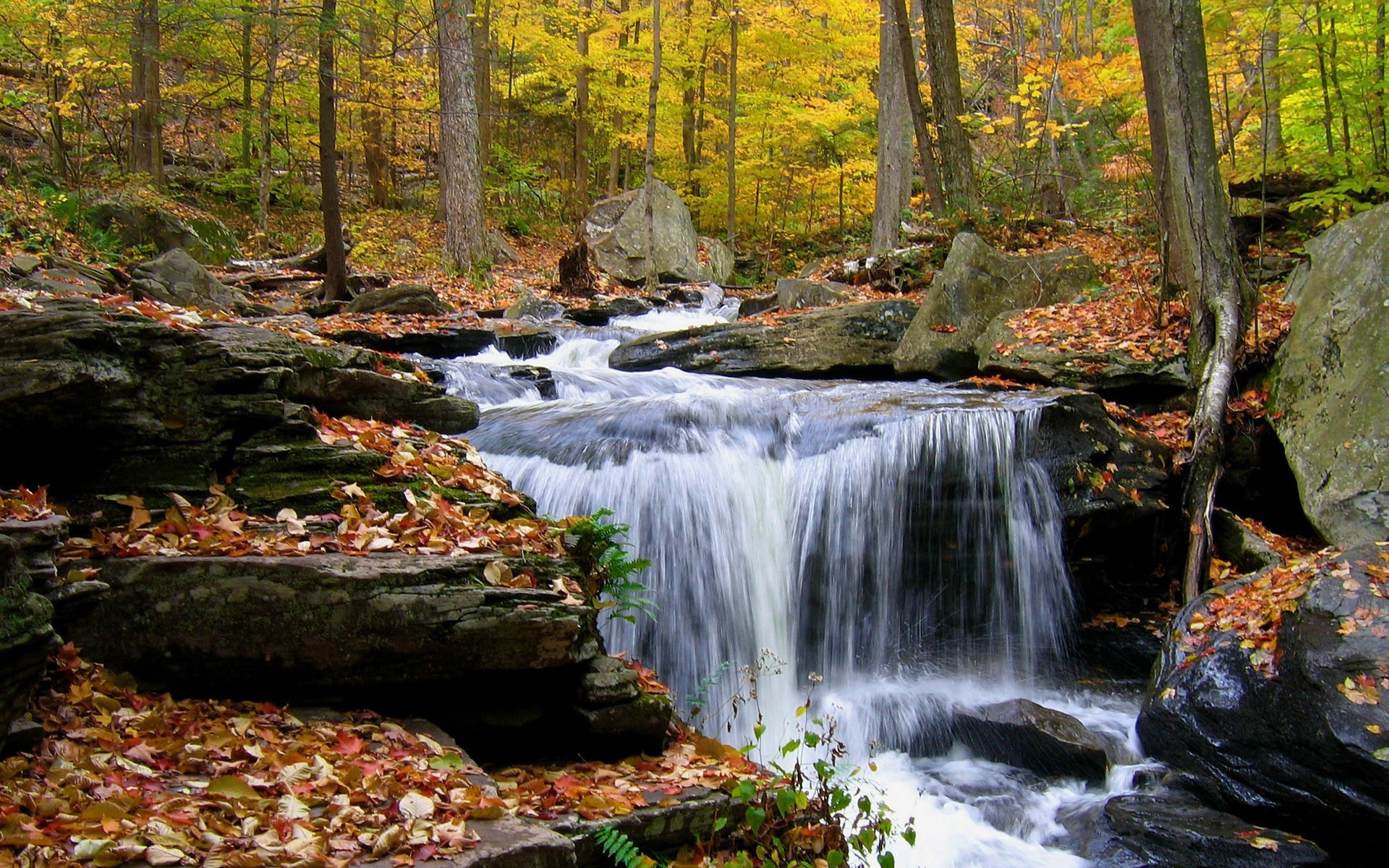 Thanks for downloading Waterfall in the autumn morning wallpaper 1920x1200