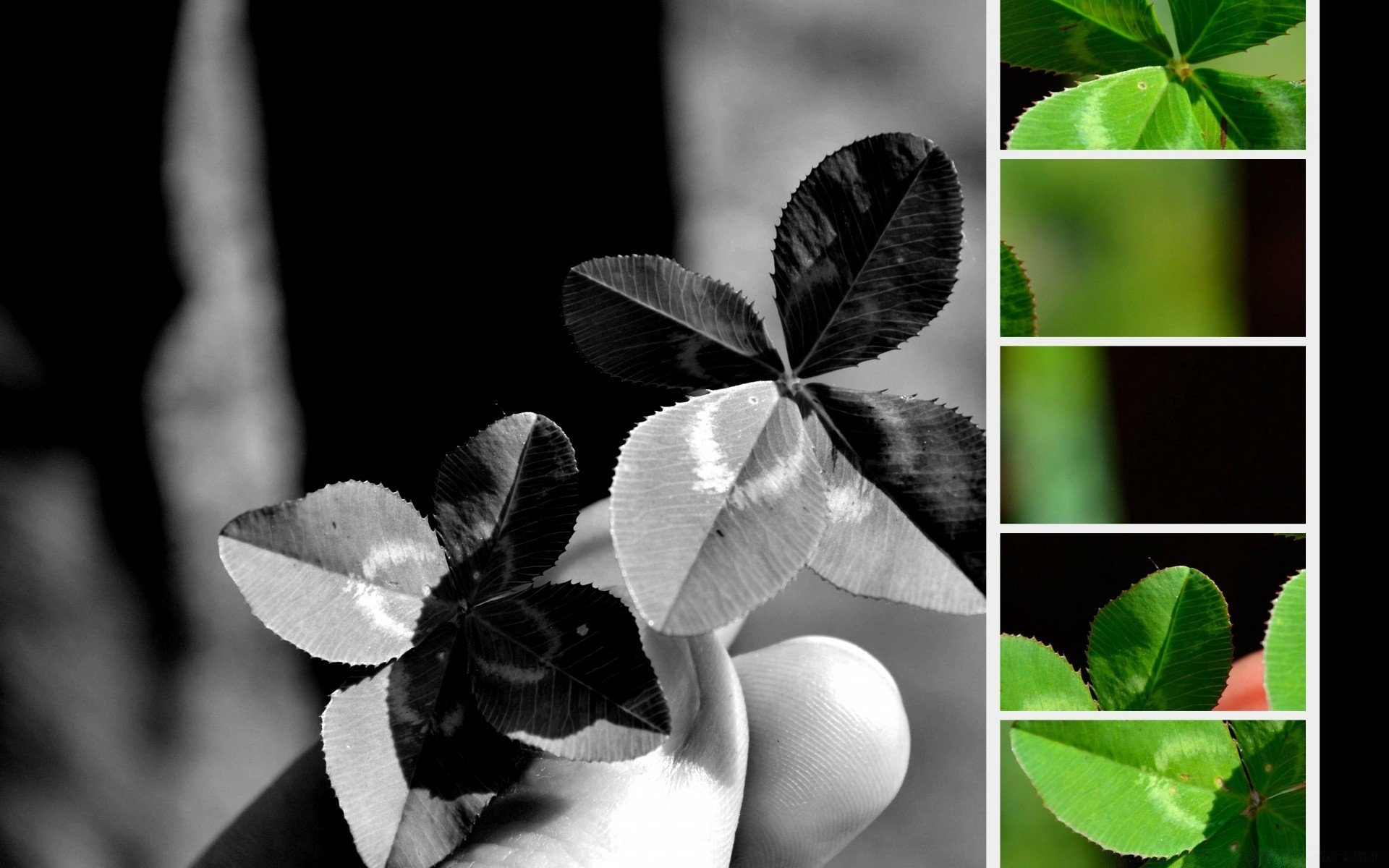 Four leaf Clovers   Android wallpapers 1920x1200