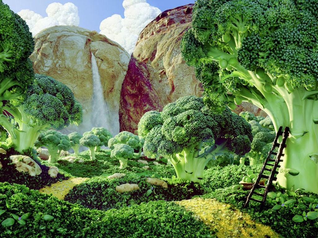 Vegetable Garden Wallpaper   Wallpaper Gallery 1024x768