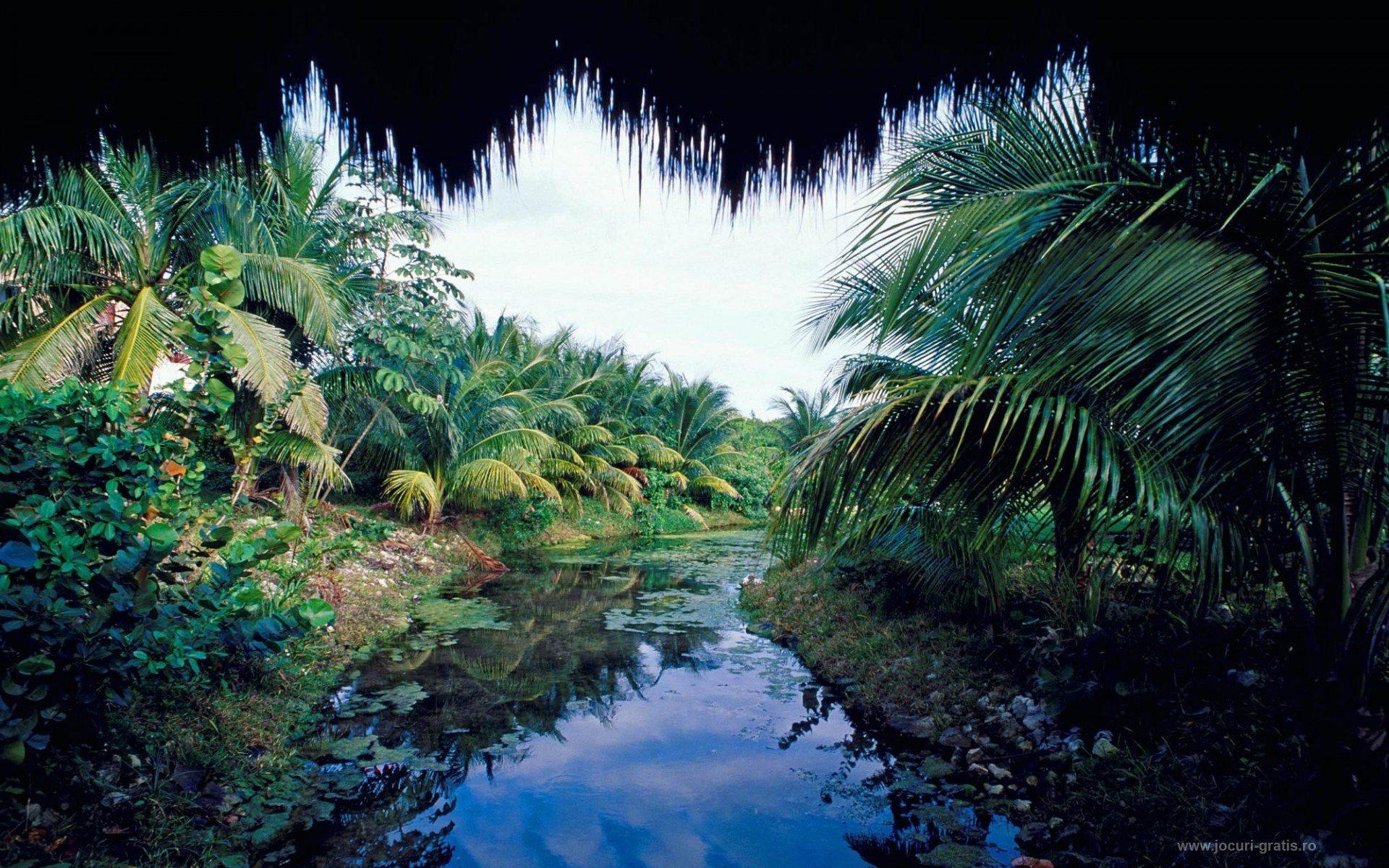 Jungle wallpaper for home wallpapersafari for Household wallpaper