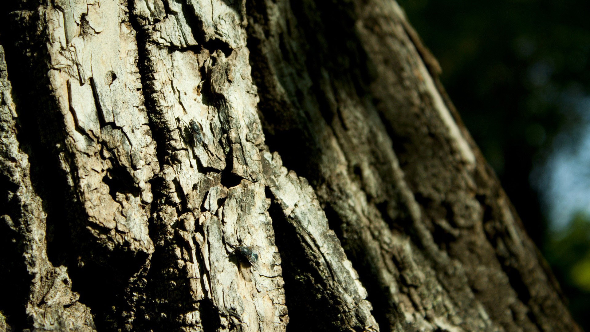 Tree bark wallpaper 11420 1920x1080