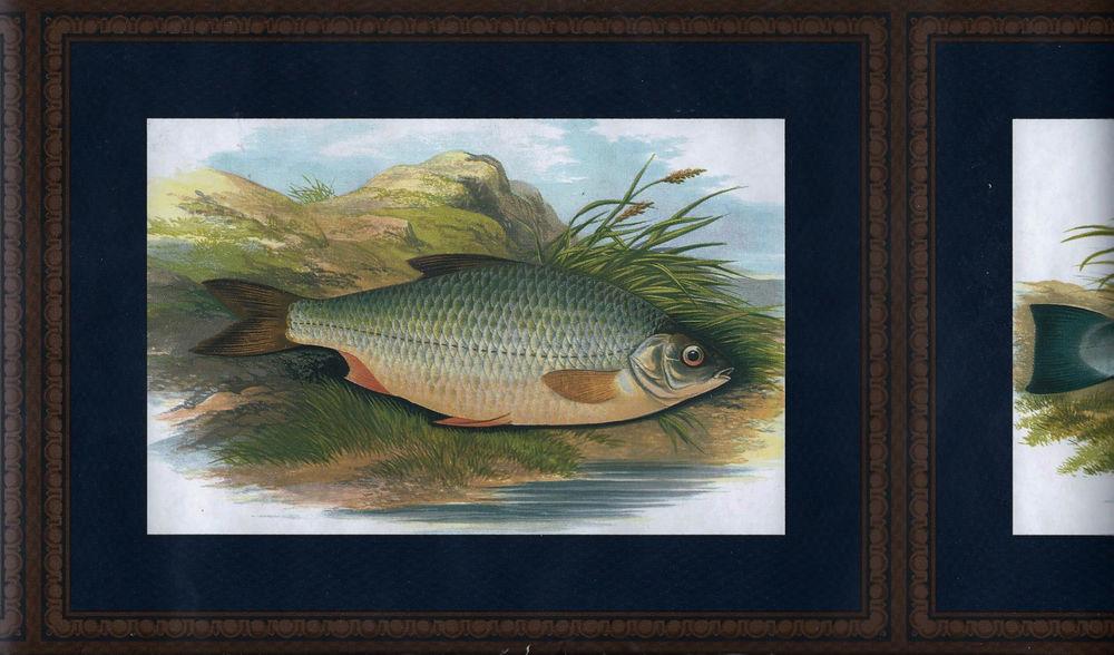 Fish Framed in Navy Blue Trout etc Wallpaper Border eBay 1000x588