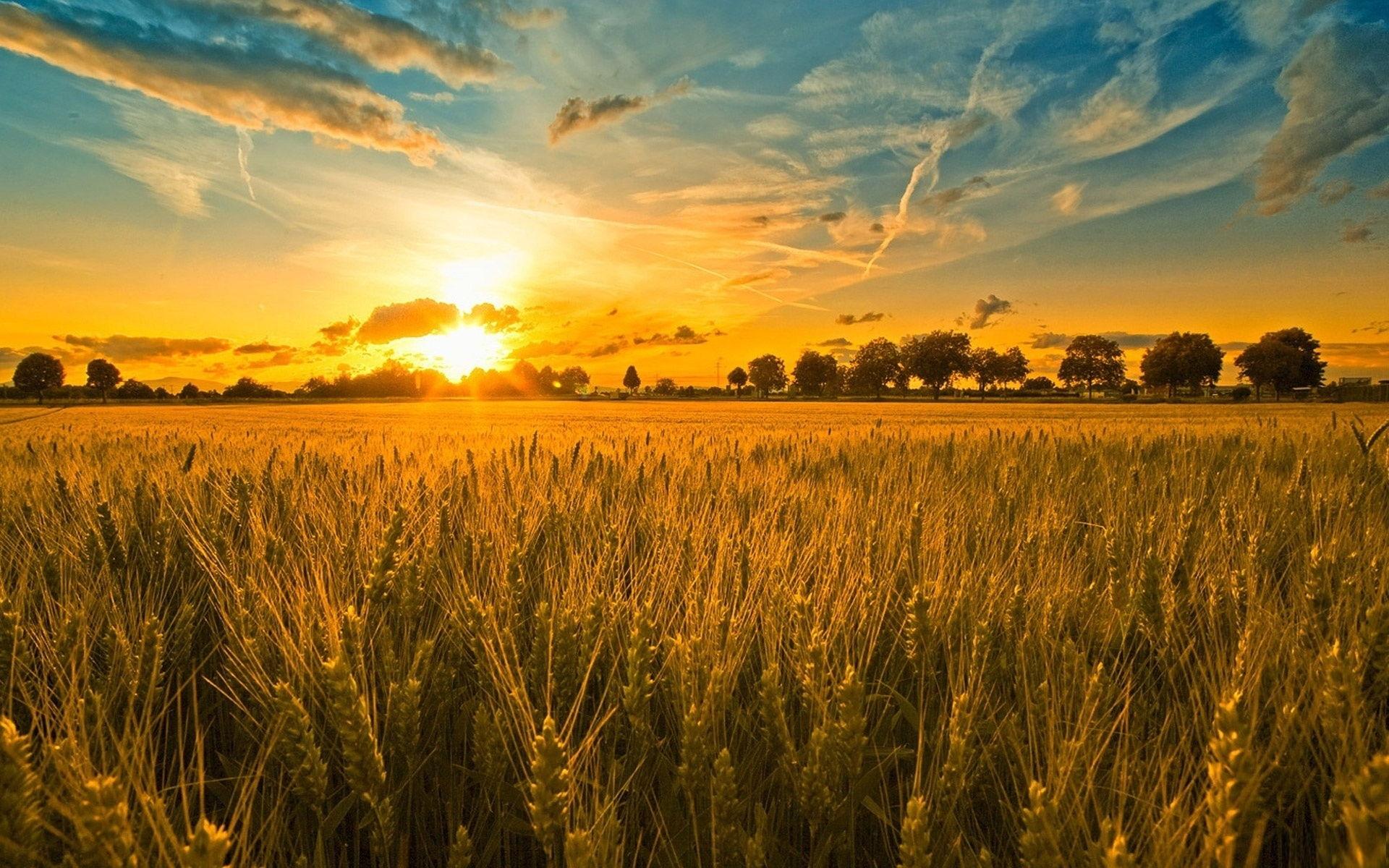sunset and wheat field wallpaper hd beautiful desktop background 1920x1200
