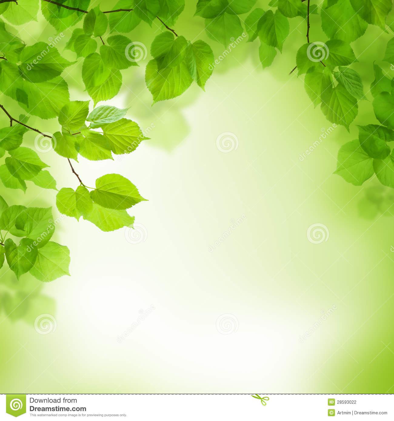 Green Leaf Wallpaper Border HD Wallpapers on picsfaircom 1300x1390