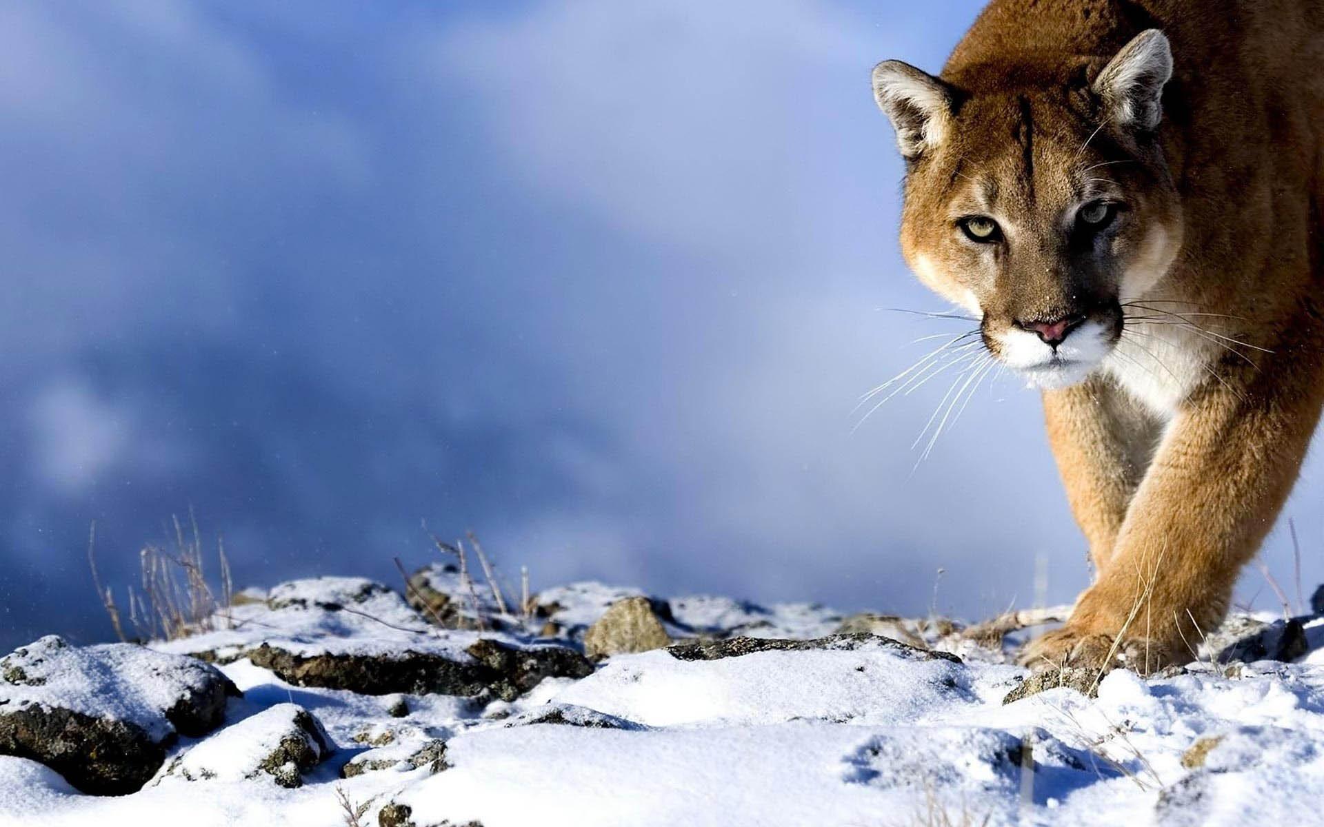Free Download Description Osx Mountain Lion Wallpaper Is A Hi Res