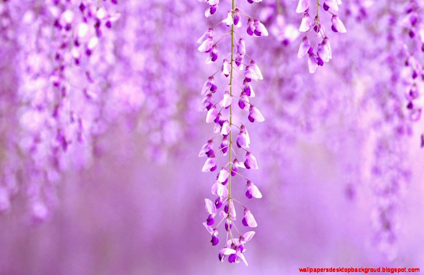 Purple Nature Wallpaper Computer Wallpapers Desktop Backgroud 1360x882