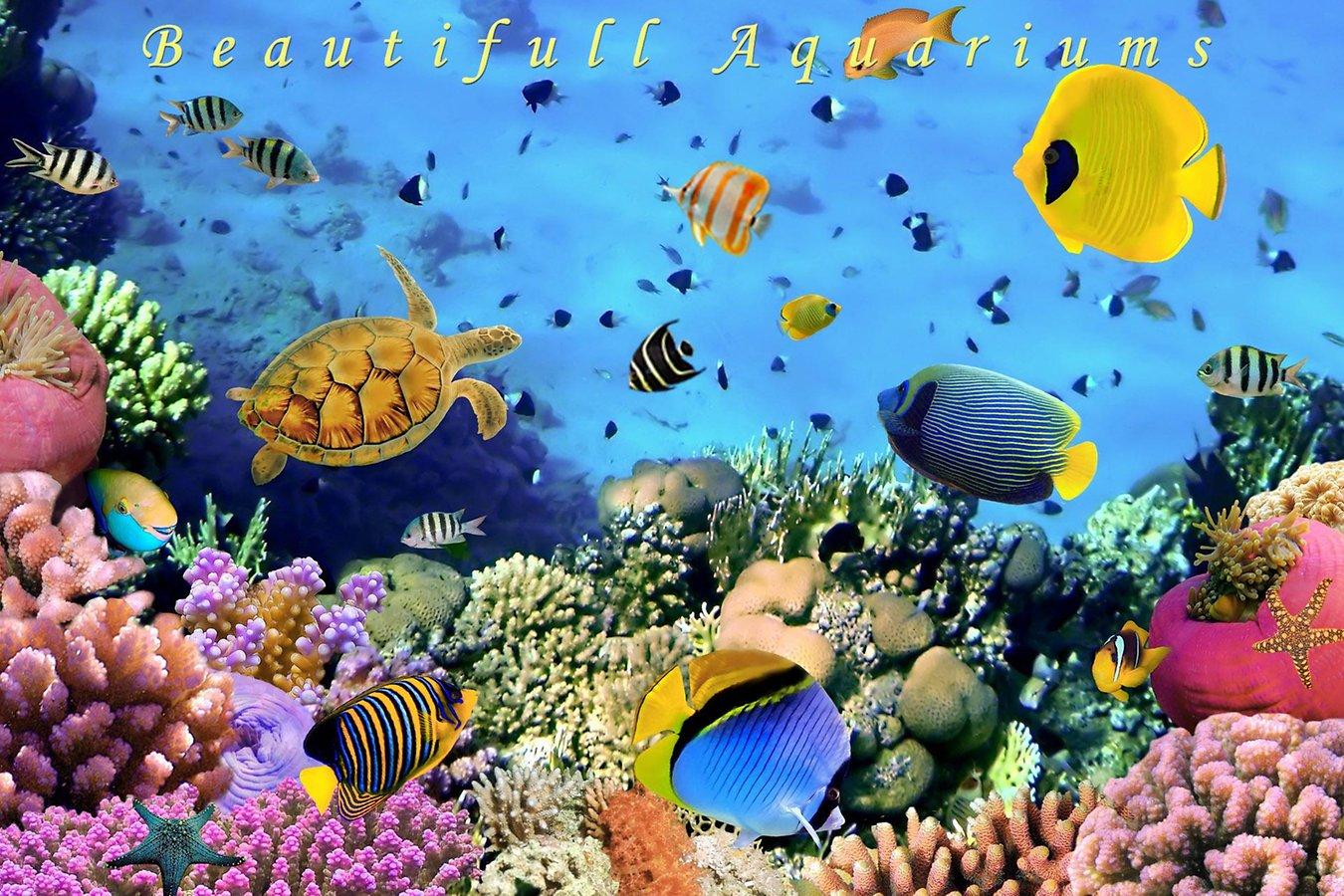 Live Fish Tank Wallpaper