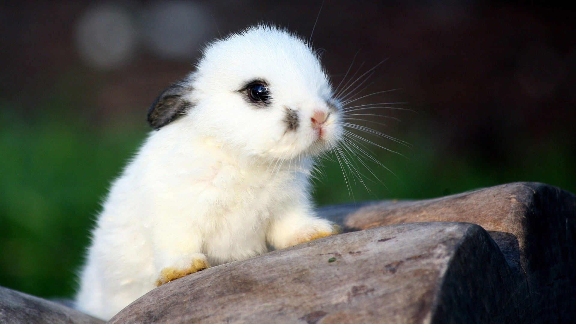 Baby Animal Wallpaper HD Images One HD Wallpaper 1920x1080