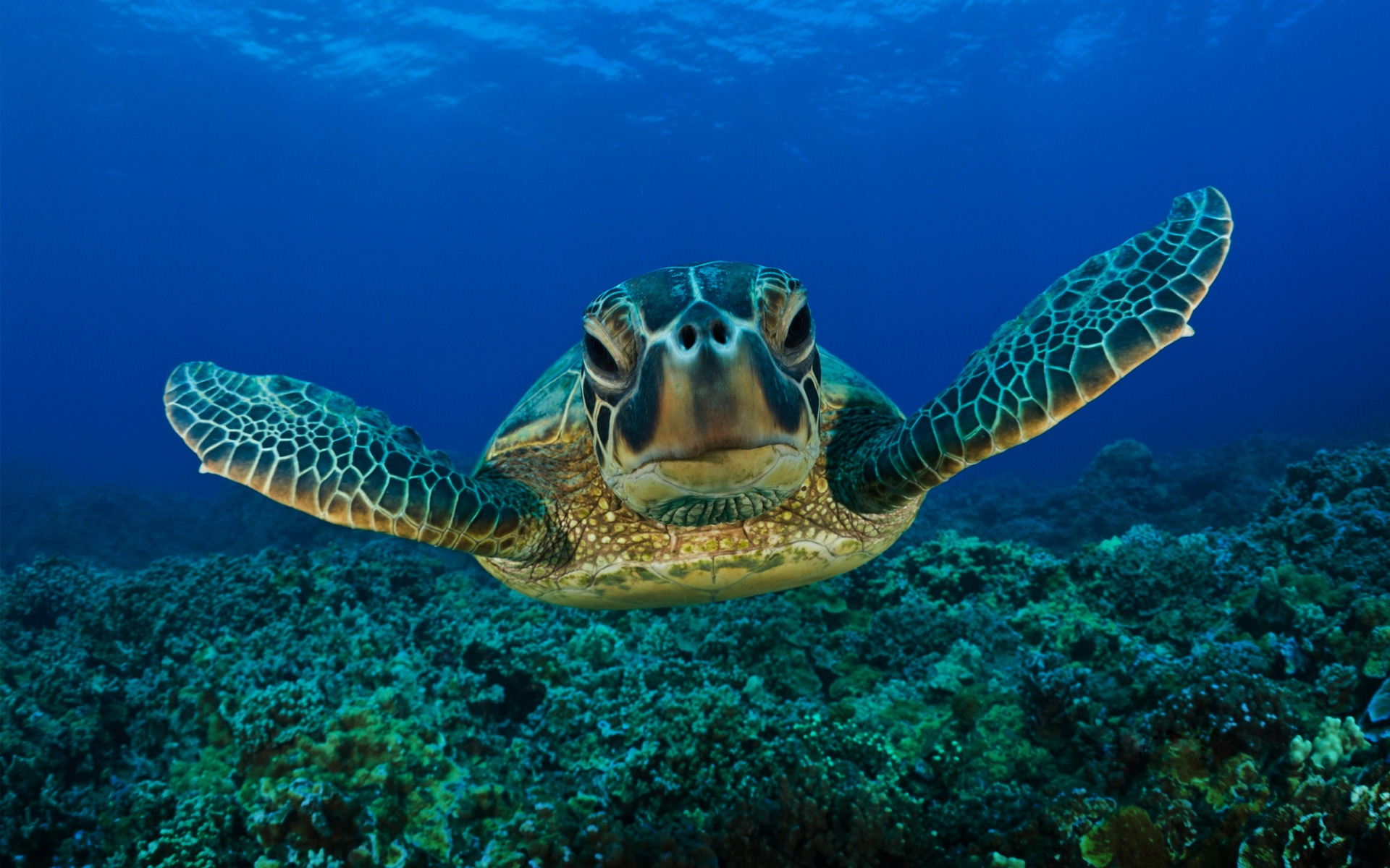Sea turtle wallpapers and images   wallpapers pictures photos 1920x1200