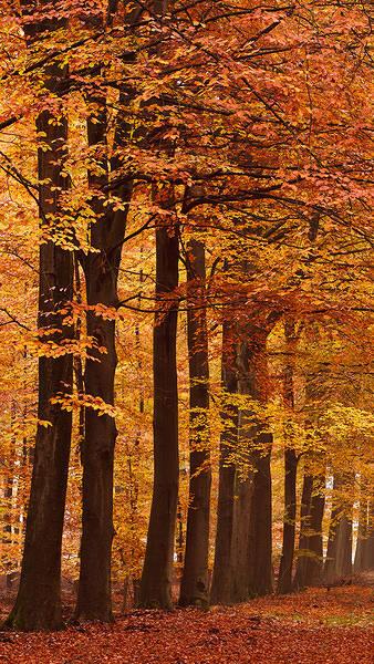 iPhone 6S Plus Autumn Wallpaper 338x600
