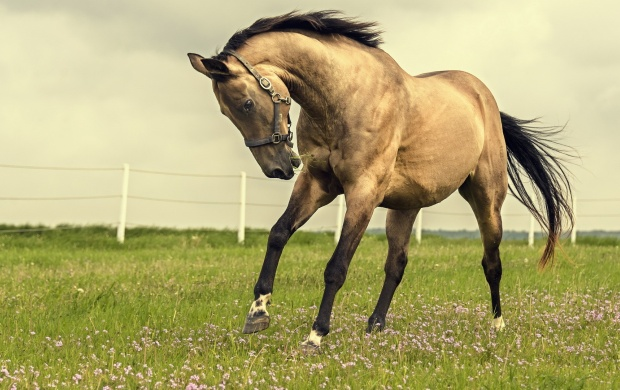 Beautiful Horse In Grass Field click to view 620x390