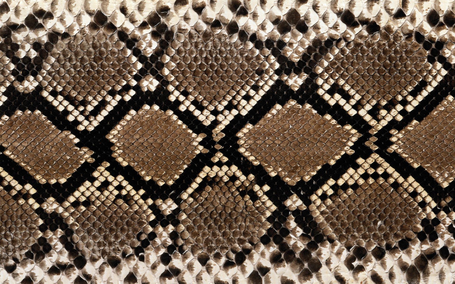 snake skin wallpaper   ForWallpapercom 1920x1200