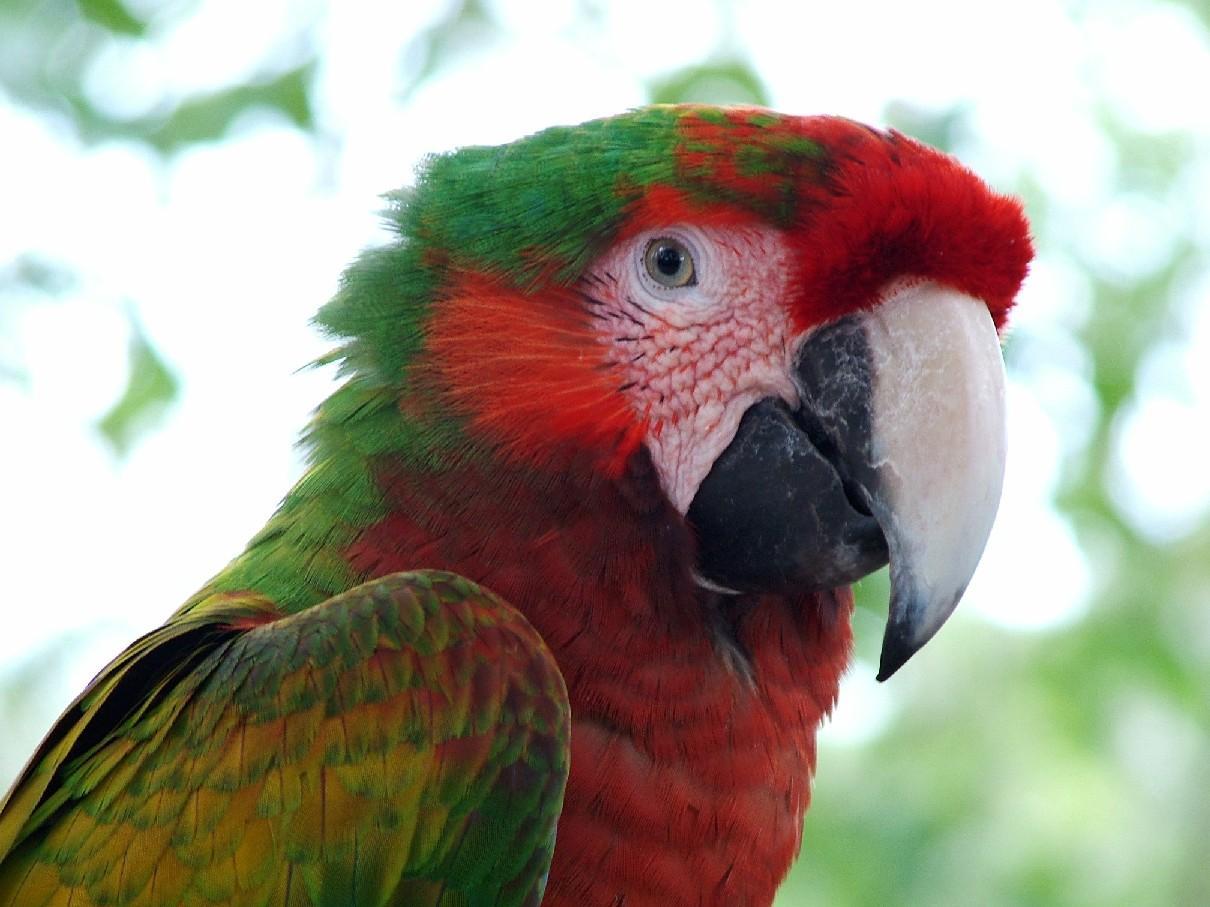 tropical birds wallpaper tropical birds 1210x907