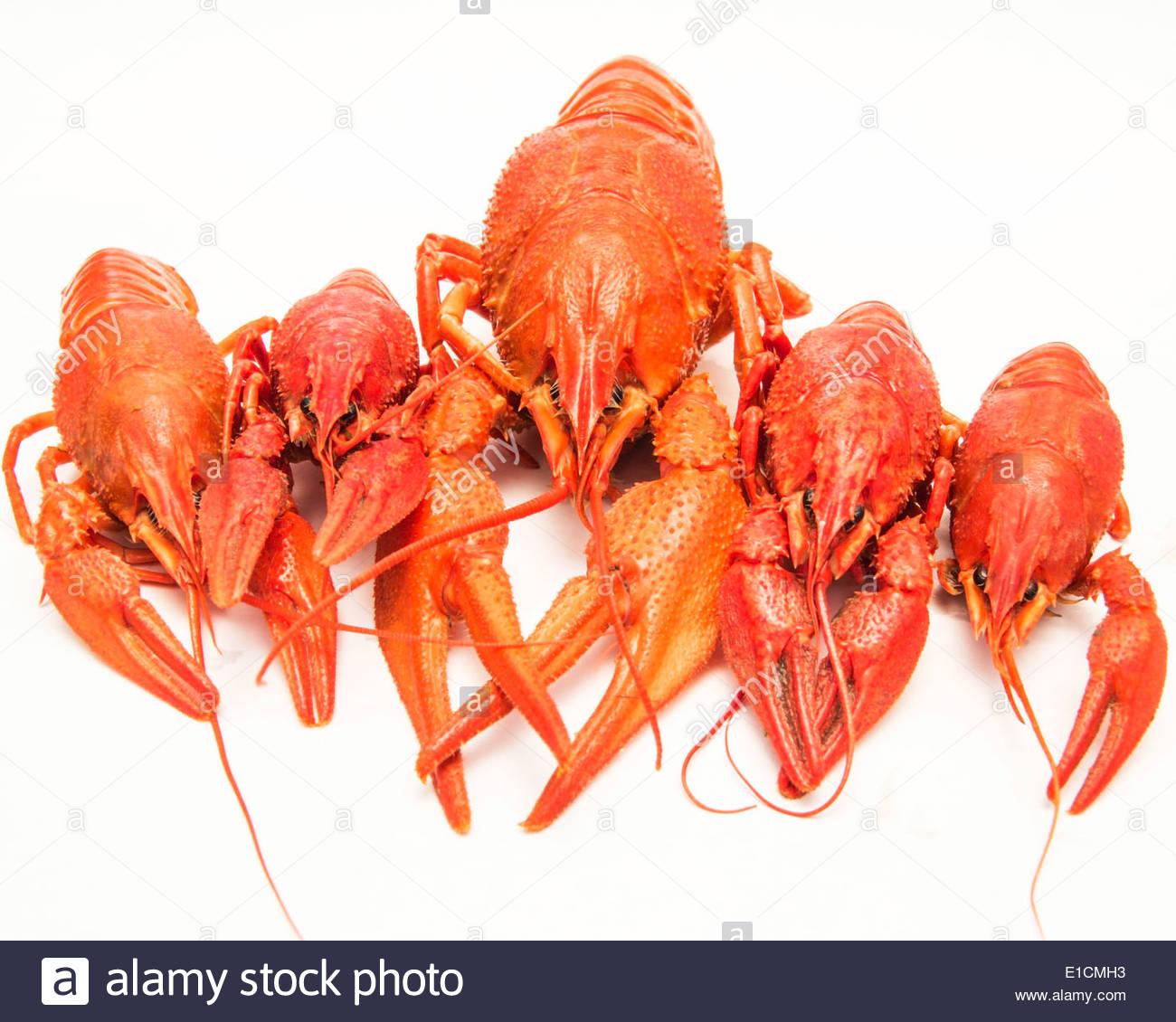 Boiled crawfish on a white background Stock Photo 69735711   Alamy 1300x1130