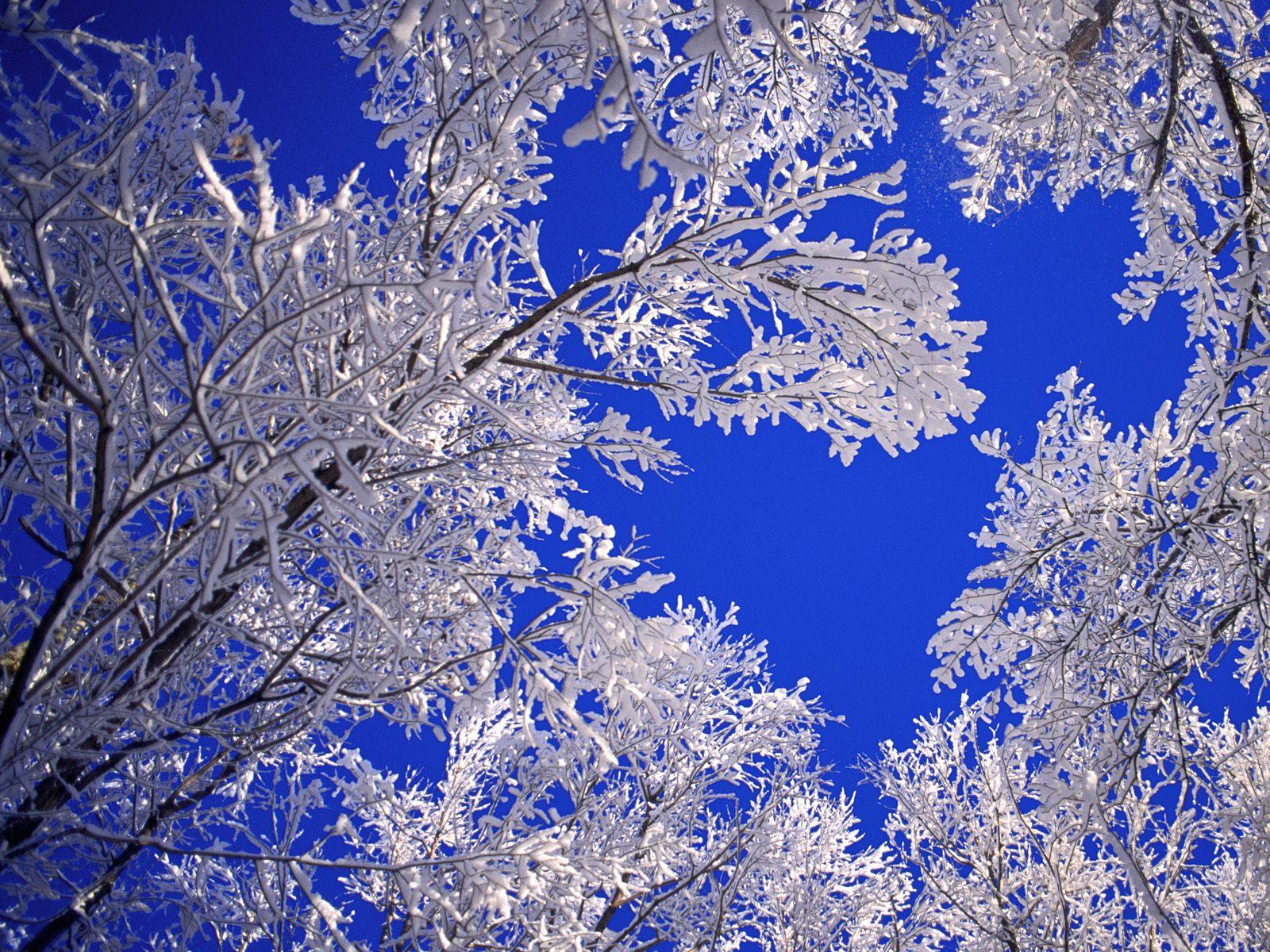 Desktop Wallpaper Winter Scene Winter Scene Modern FHDQ 1600x1200 1600x1200