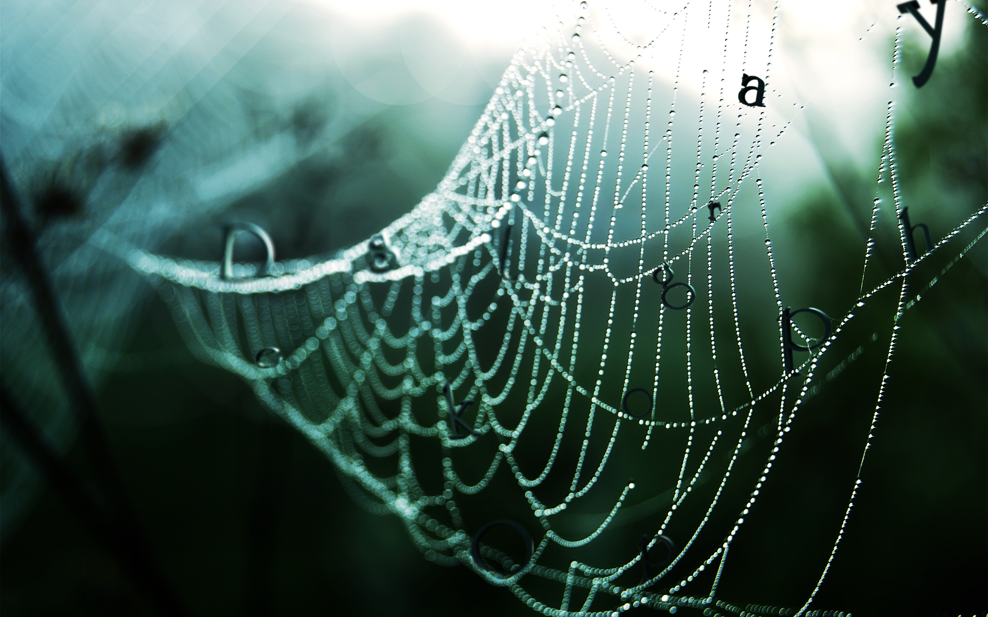 1920x1200 Wet spider web desktop PC and Mac wallpaper 1920x1200