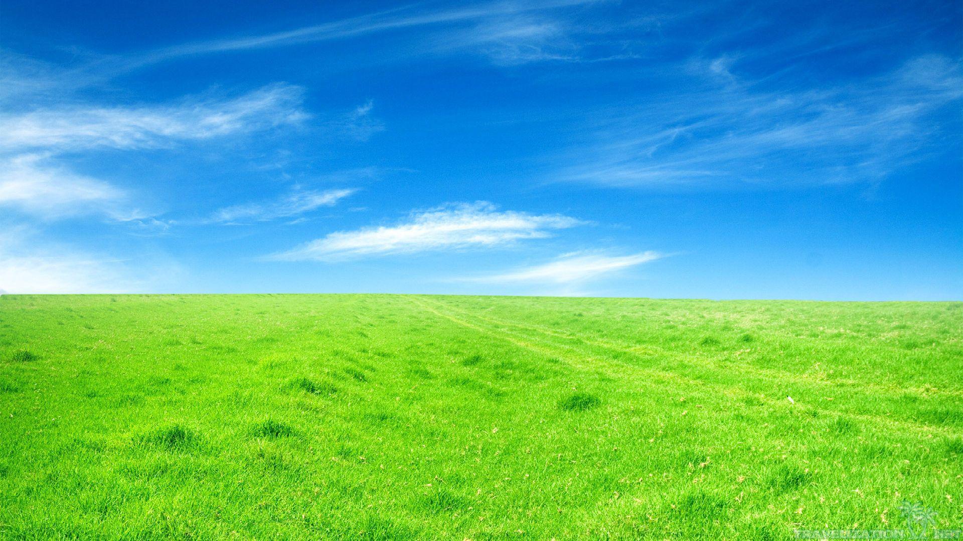 Grassland Wallpapers Wallpaper   Green HD Wallpaper