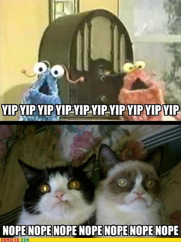 cat pictures funny grumpy cat pictures grumpy cat 65 pics grumpy cat 620x826