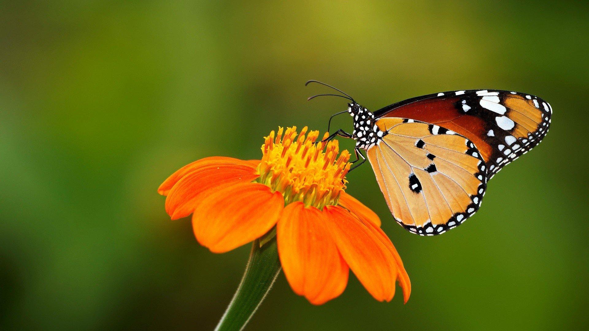 [44+] Butterflies and Flowers Wallpaper on WallpaperSafari