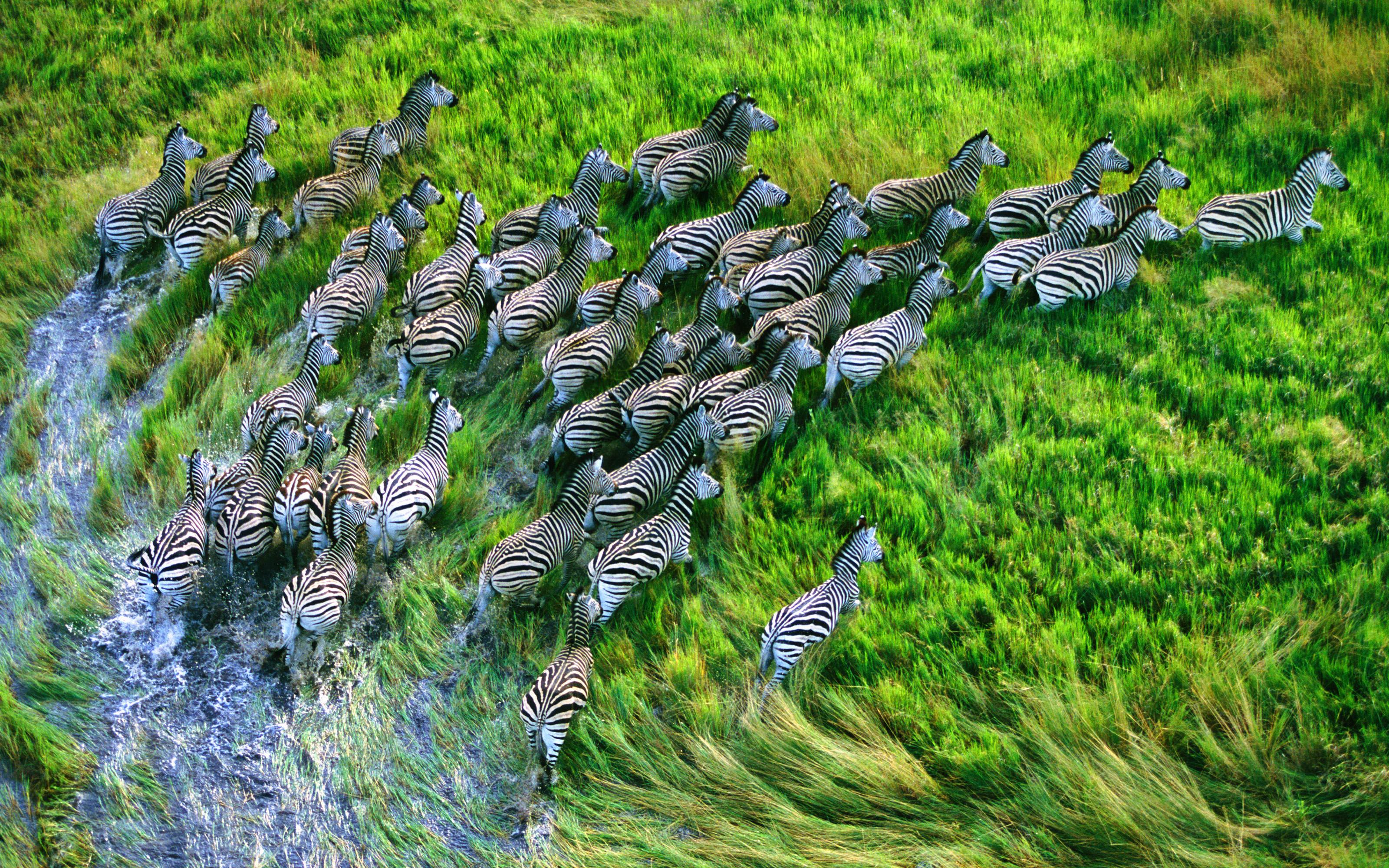 10 Beautiful Mac OS HD Wallpaper and MacBook Pro Retina Display Zebra ...