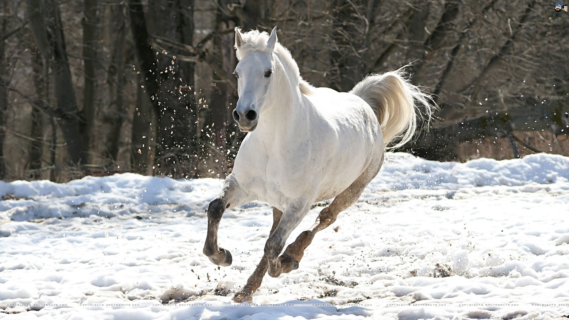 Free Horses Wallpapers For Windows Wallpapersafari