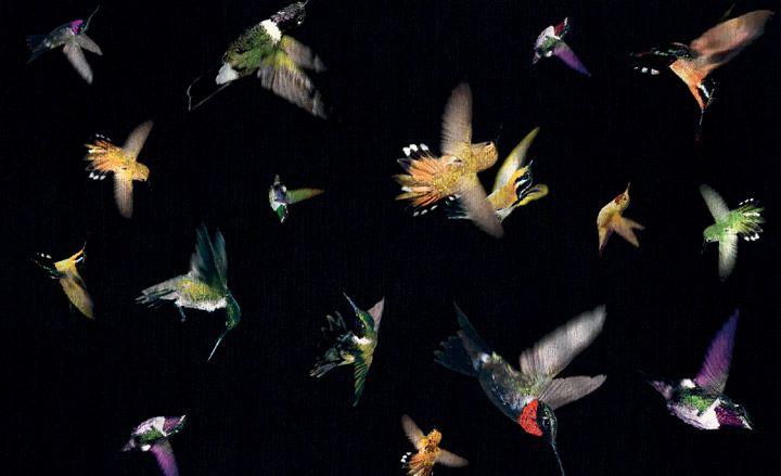 Alexander Mcqueen Wallpaper Wallpapersafari