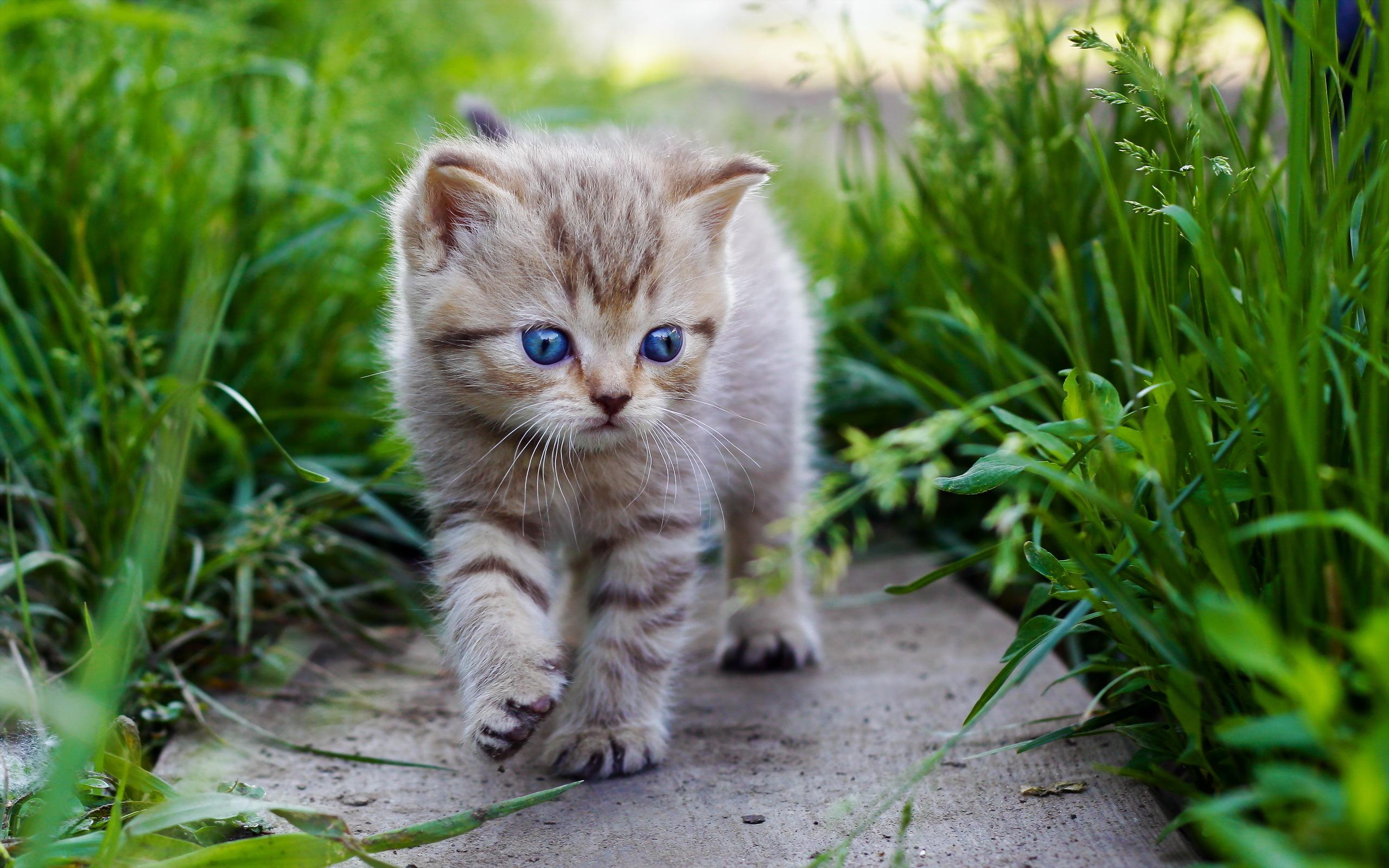Free Download Pics Photos Hd Wallpaper Cute Baby Cat For Desktop 2560x1600 For Your Desktop Mobile Tablet Explore 76 Baby Kitten Wallpaper Cute Kittens Wallpapers Free Kittens Wallpaper For