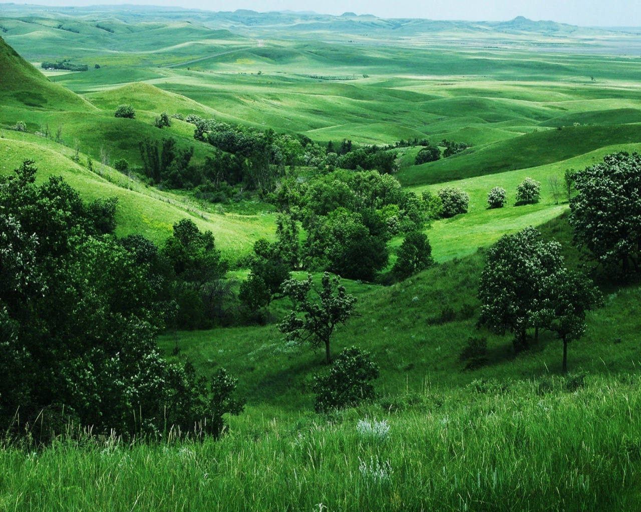 Related to wallpapers Green Nature Wallpapers   blogspotcom 1280x1024