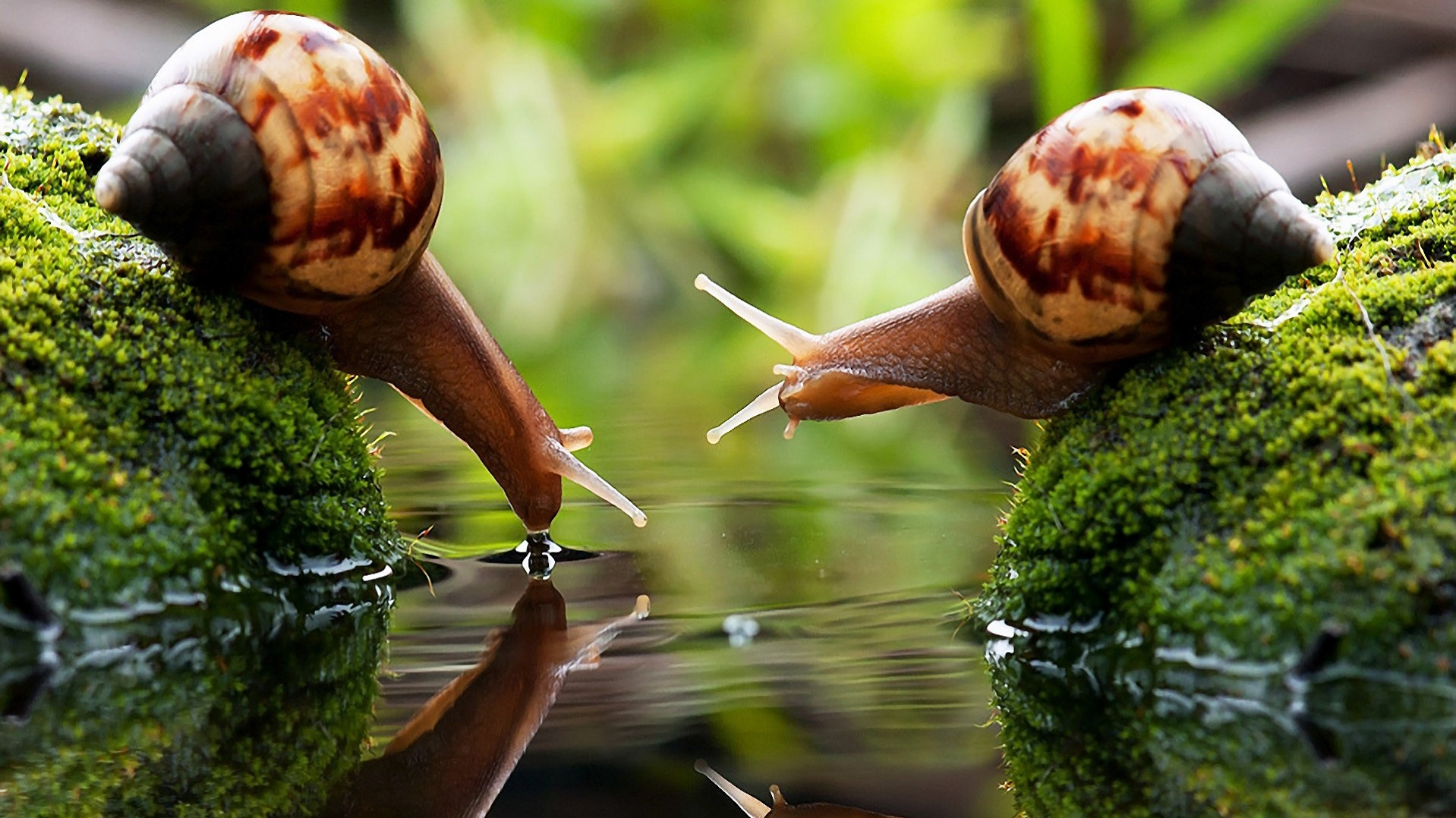 snail macro photography free wallpapers backgrounds PHOTO SHARNG 1918x1078