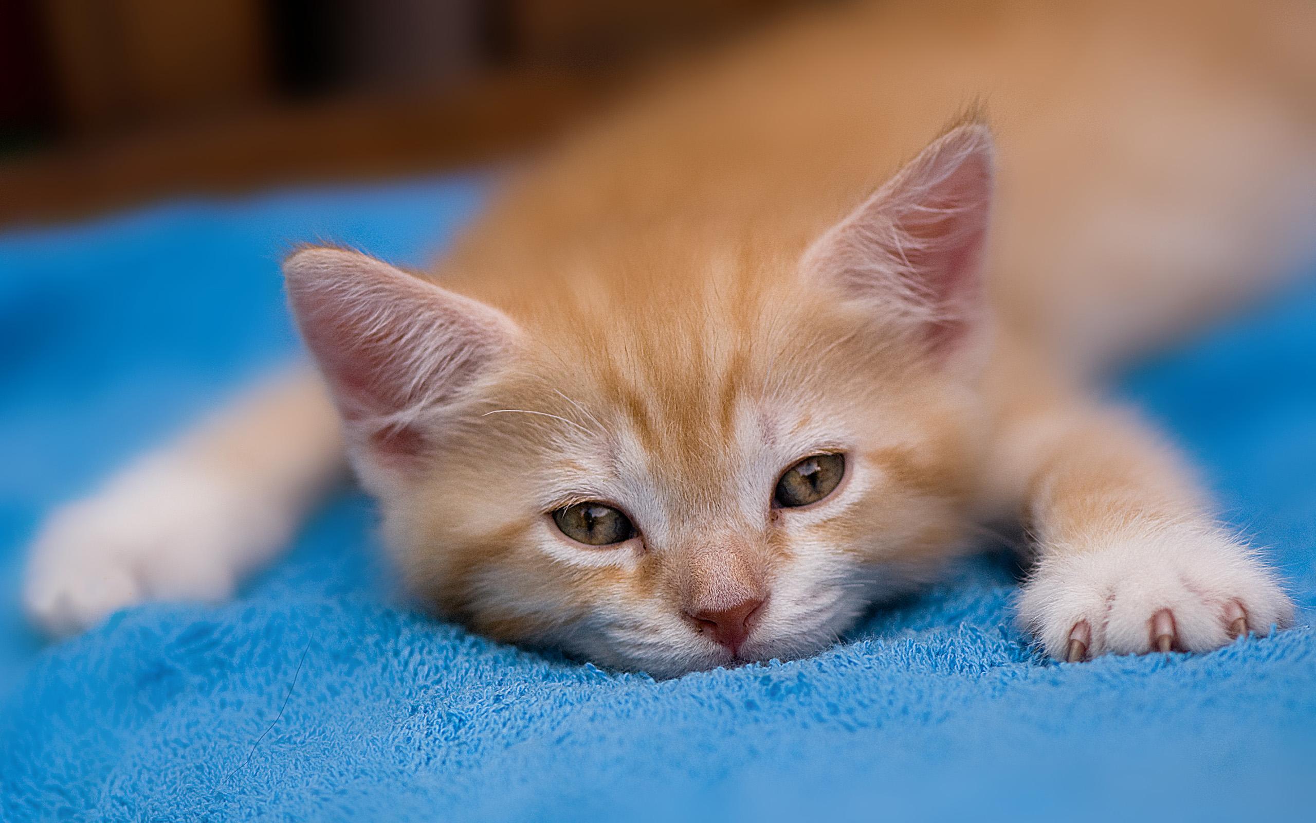 Рыжий котенок  № 1144317 загрузить