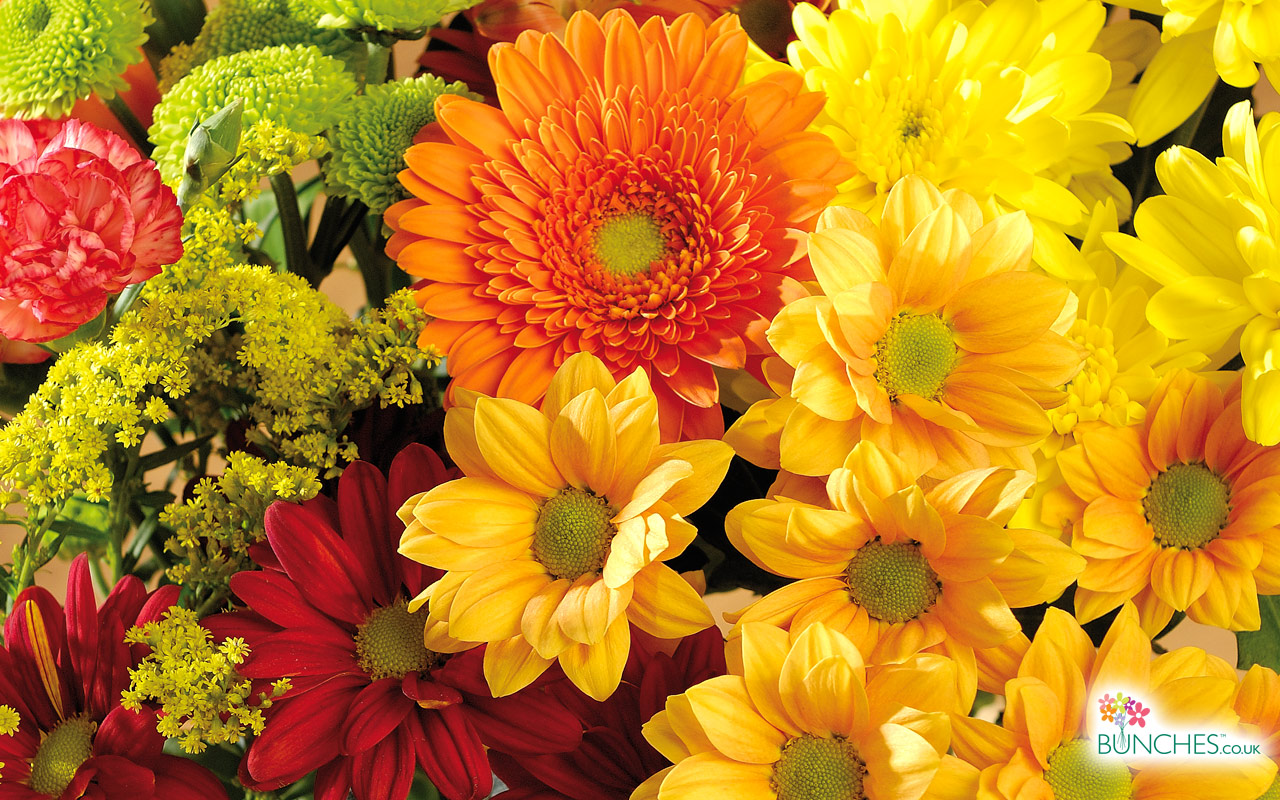 fall flowers wallpaper by - photo #22