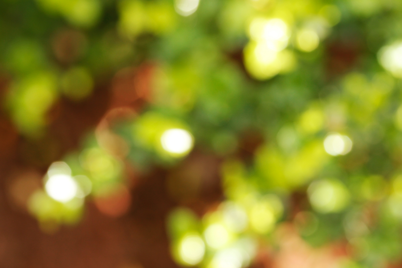 Free download Plants And Sunlight Background Blur With Bokeh