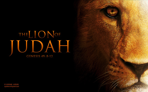 Lion Of Judah Wallpaper 500x313