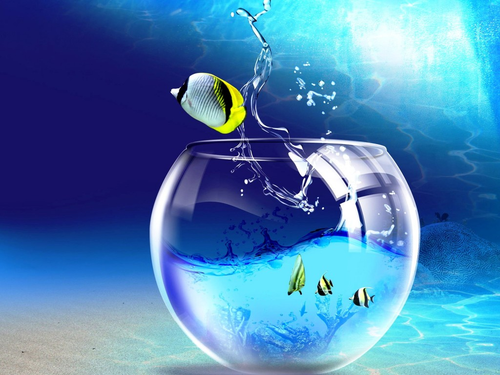 animated desktop wallpaper windows jumping fish 1024x768