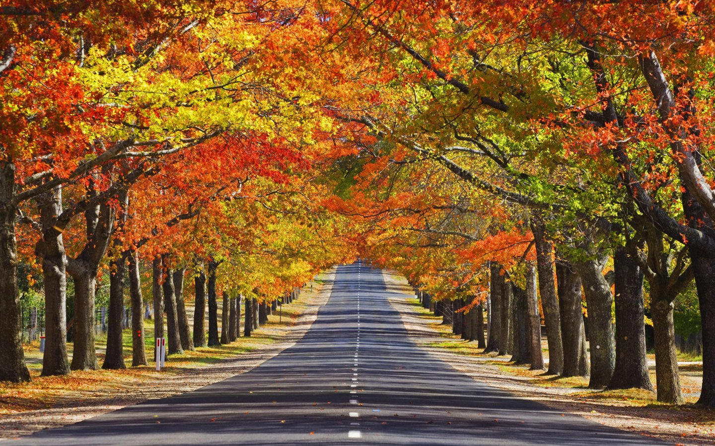 Autumn Trees   Wallpapers 1440x900