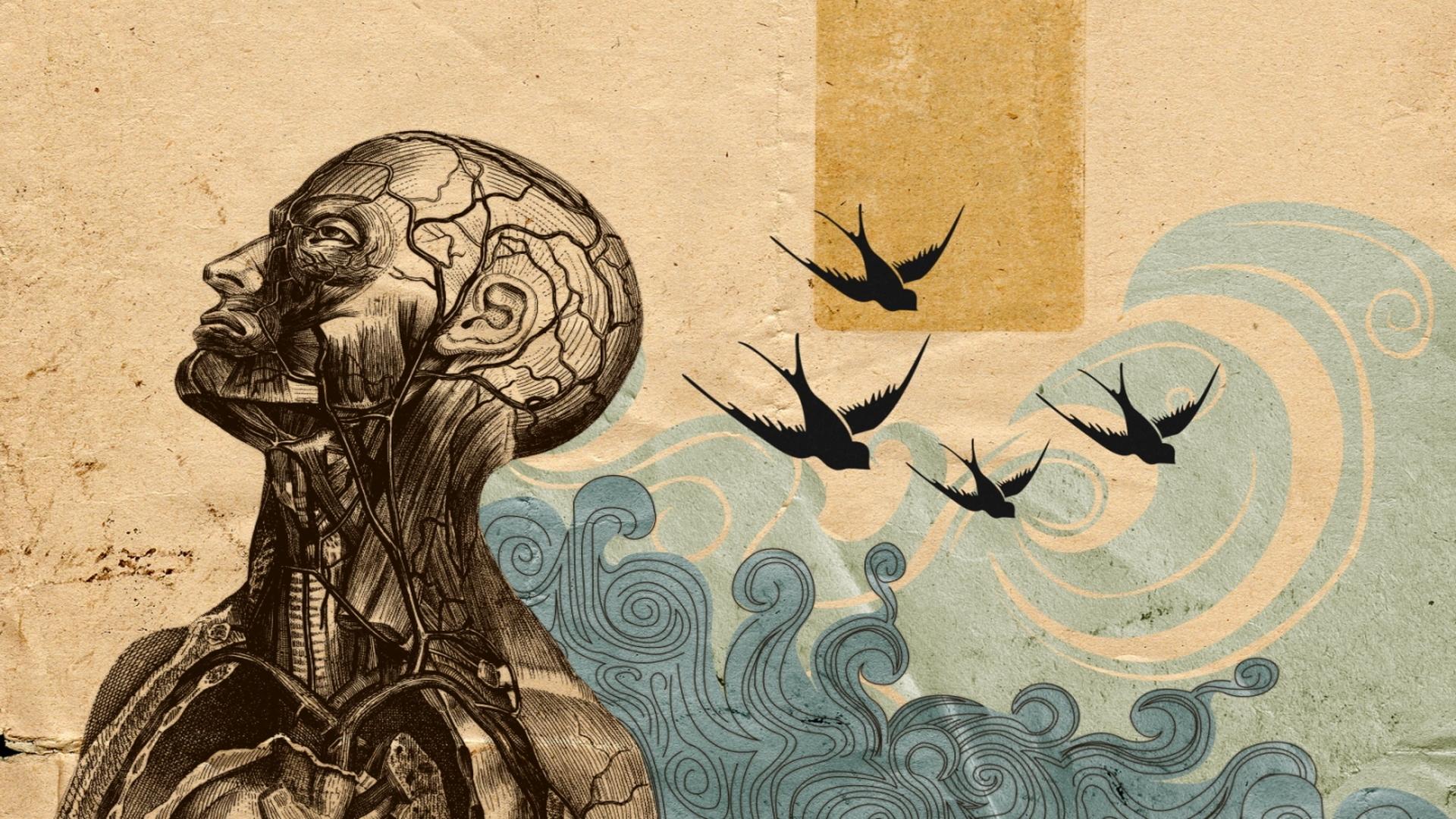 anatomy wallpaper hd wallpapersafari