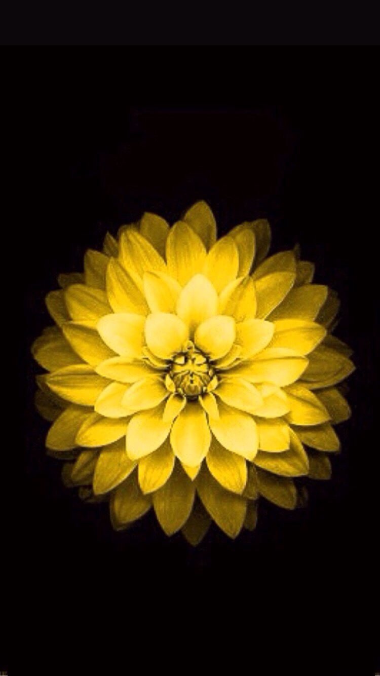 iPhone 6 flower wallpaper from apple website   iPhone iPad iPod 750x1334