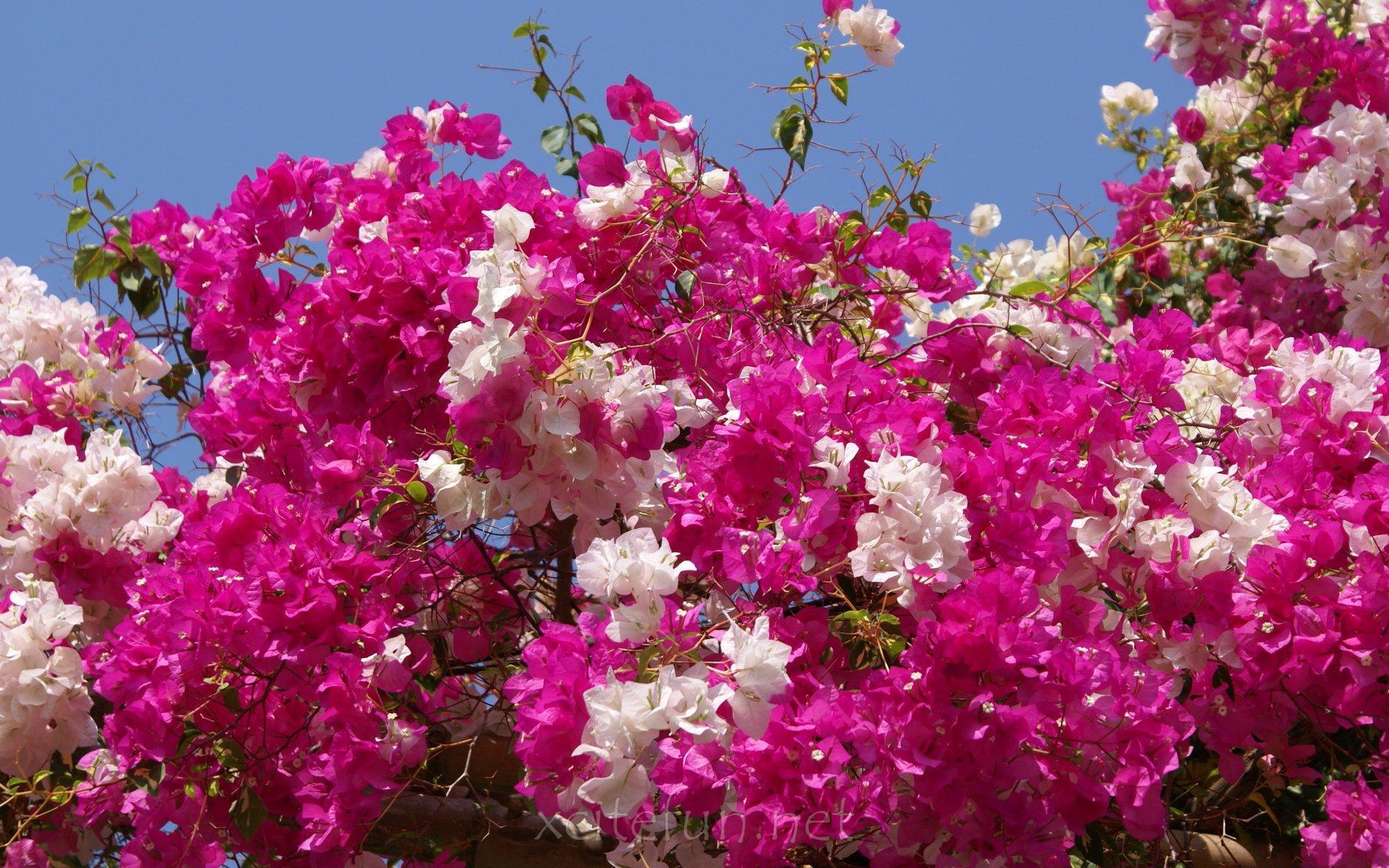 1920x1200px Most Beautiful Nature Wallpaper Flowers Wallpapersafari