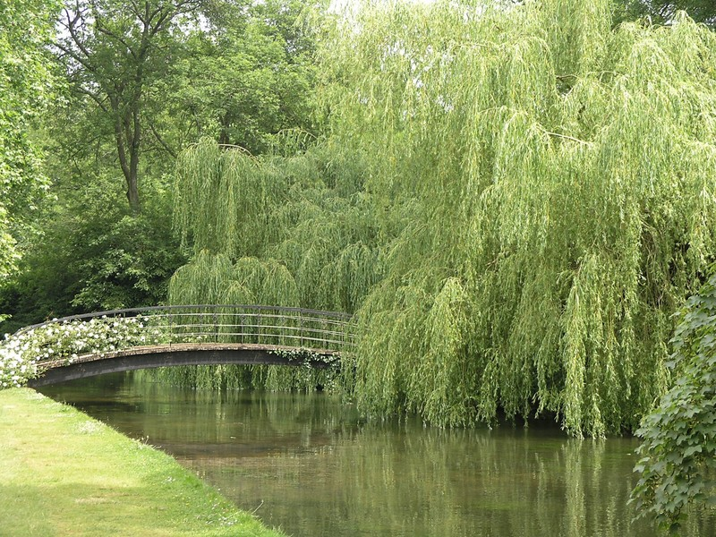 Weeping Willow Tree Wallpaper Weeping willow 800x600